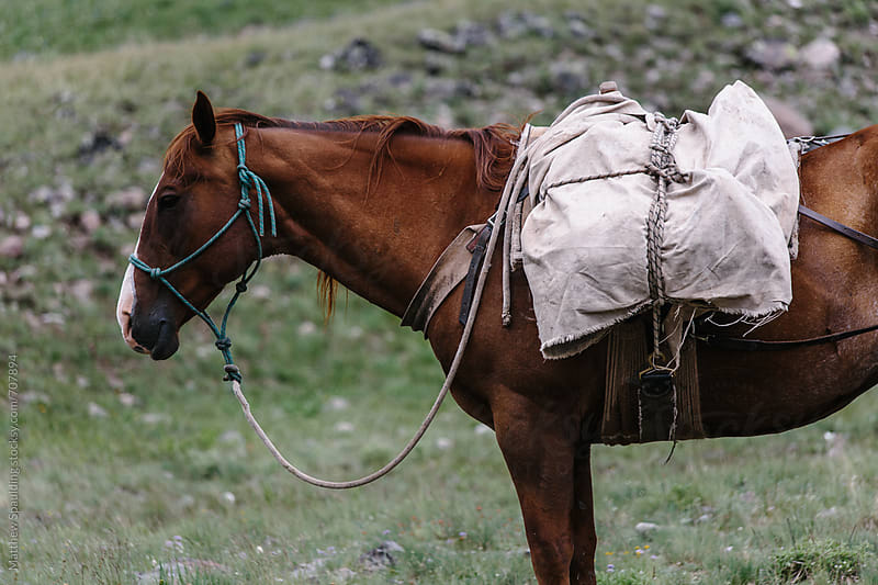 Horse with canvas and leather pack on trail by Matthew Spaulding for Stocksy United