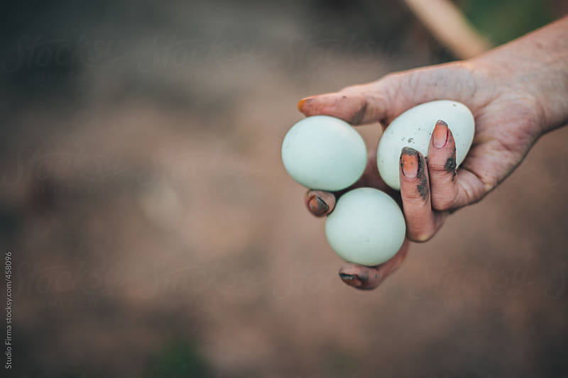 Farm Eggs by Studio Firma for Stocksy United