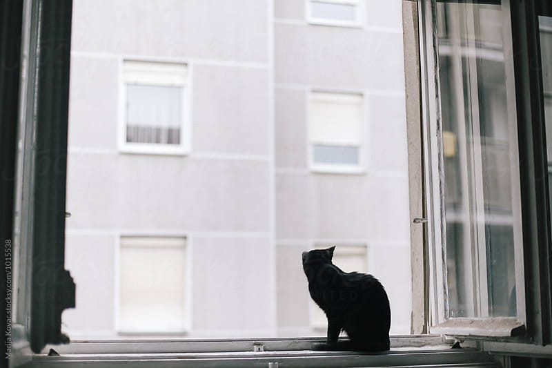 Cat on the window by Marija Kovac for Stocksy United