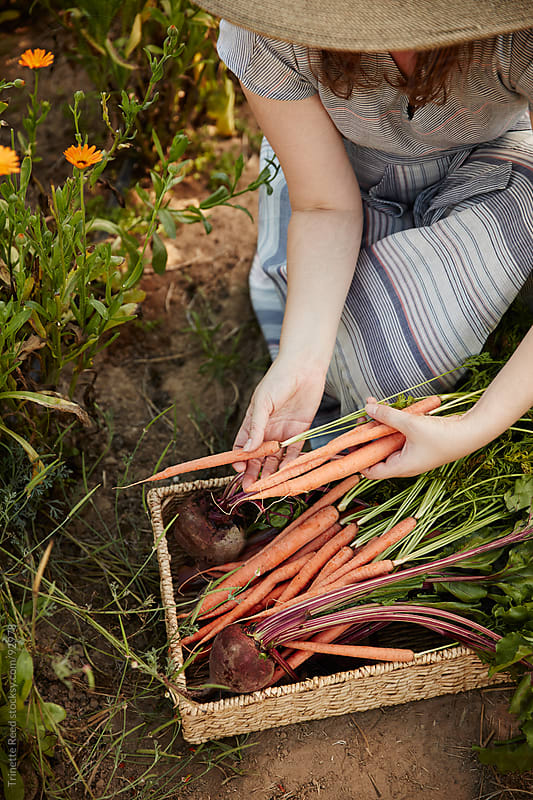Woman Farmer picking vegetables from her organic garden by Trinette Reed for Stocksy United