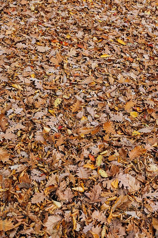 Fallen leaf background by Dimitrije Tanaskovic for Stocksy United