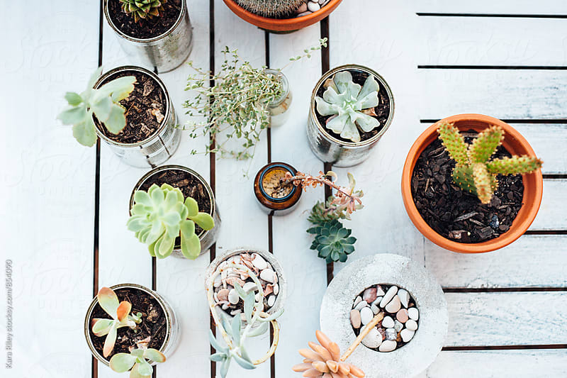 Succulents on a white table by Kara Riley for Stocksy United