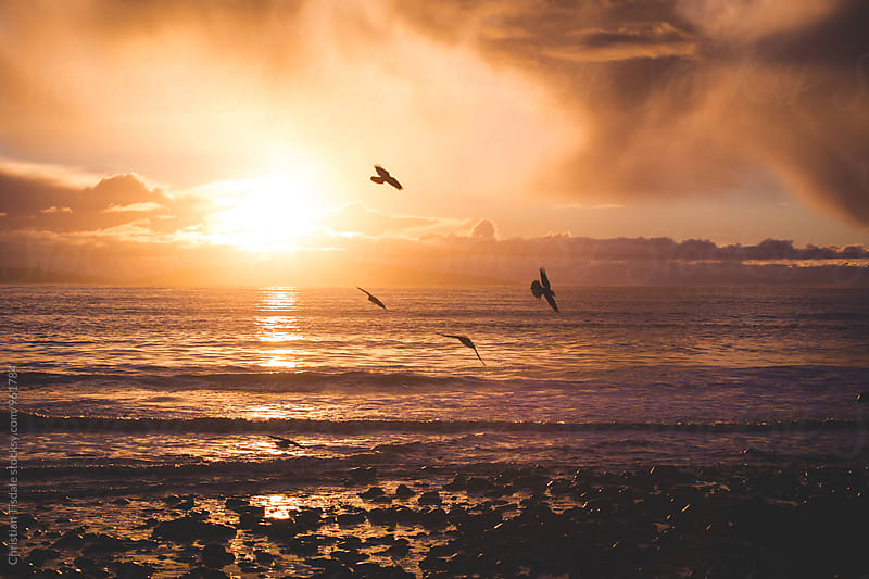 Birds flying in front of sunset over the pacific by Christian Tisdale for Stocksy United