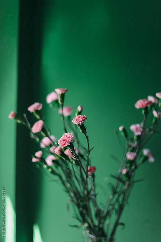 Pink flowers indoor by Marija Kovac for Stocksy United