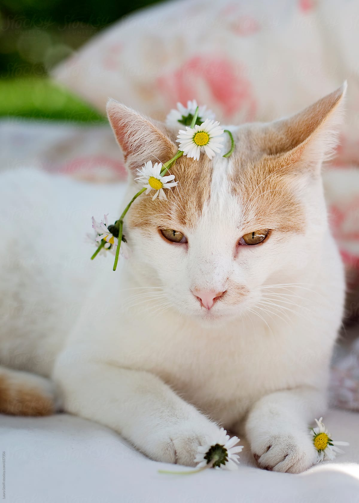 King Of Flower Cat Wears Flowers Crown On His Head And Holds