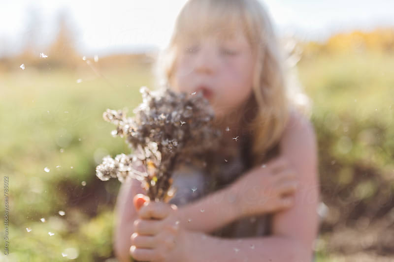 Young girl blowing seeds from wild bouquet of flowers by Carey Shaw for Stocksy United