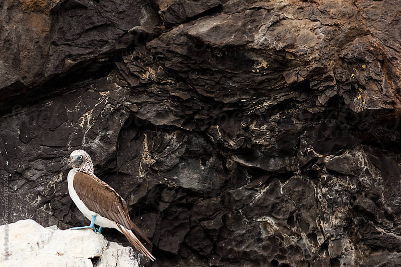 Galápagos Islands, Santa Cruz Island, Ecuador by Mark Pollard for Stocksy United