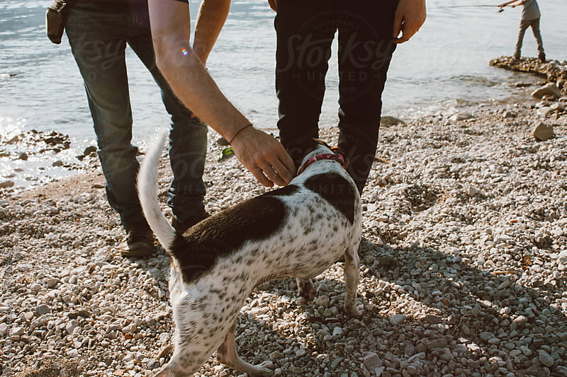Walking on the beach with a dog by Giada Canu for Stocksy United