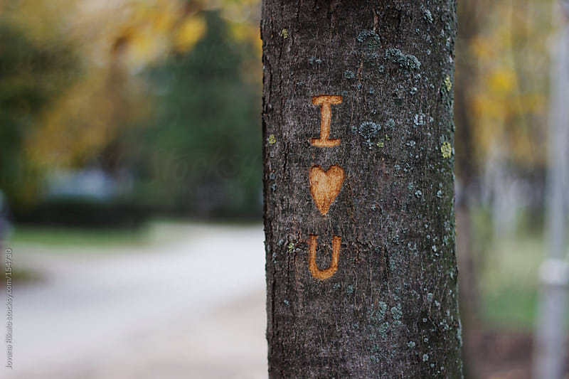 I love you message etched on a tree by Jovana Rikalo for Stocksy United