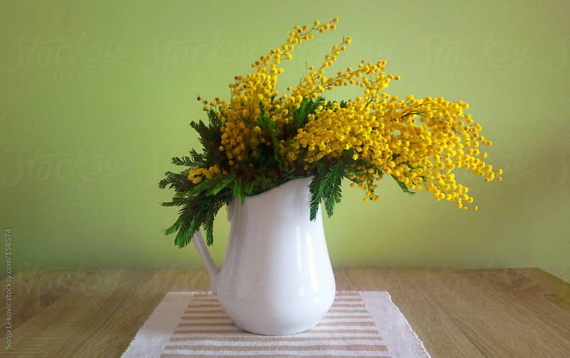 mimosa flower in a vase on the table by Sonja Lekovic for Stocksy United