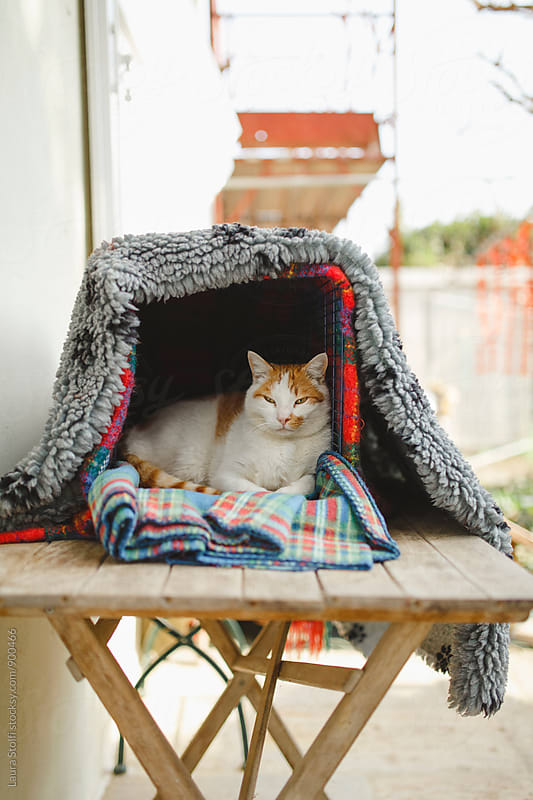 White and ginger cat laying in kennel on wooden table in garden by Laura Stolfi for Stocksy United