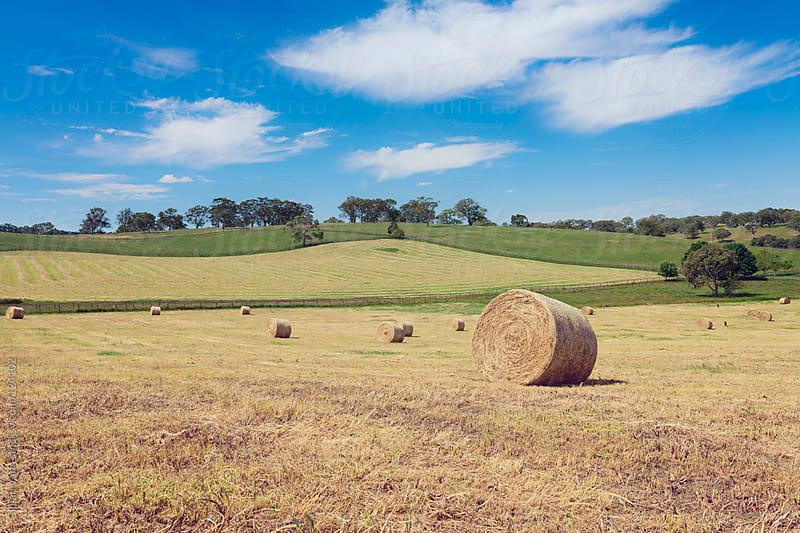 hay rolls in the field by Gillian Vann for Stocksy United
