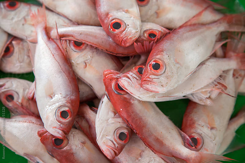 Fish for Sale at Asian Fish Market in Hoi An Vietnam by Rowena Naylor for Stocksy United