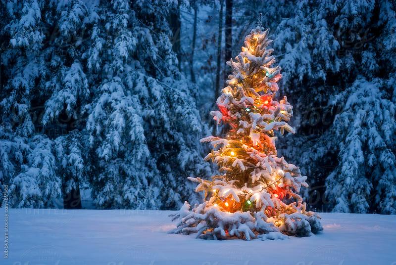 Christmas Tree by Rob Sylvan for Stocksy United