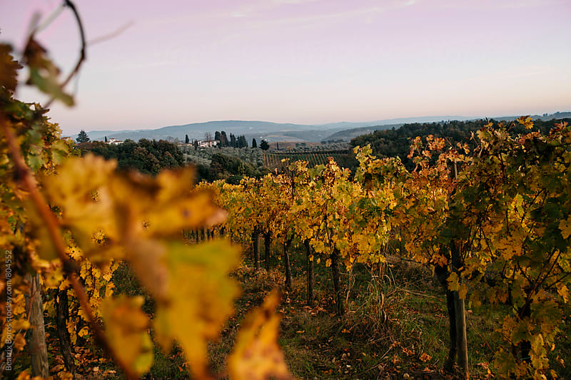 Tranquil scene in Fall in the Tuscan vineyards by Beatrix Boros for Stocksy United