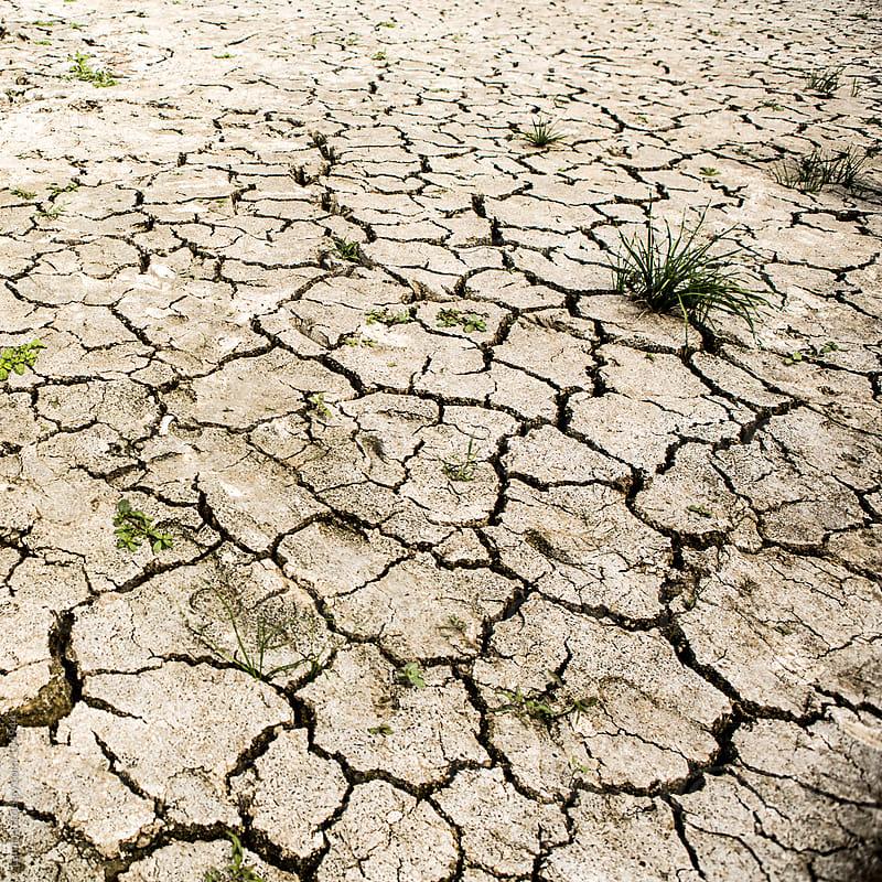 Dry Land by Lumina for Stocksy United