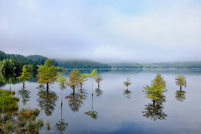 Cypress trees growing in lake under foggy sky by David Smart for Stocksy United