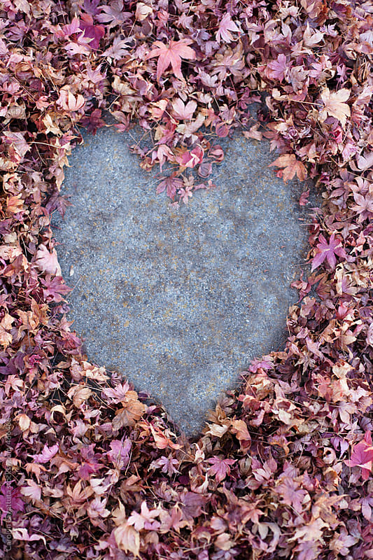 Fallen maple leafs on the ground - heart in the middle by Carolyn Lagattuta for Stocksy United