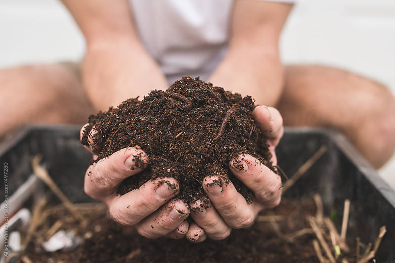 A Man Holding A Handful Of Compost With Earthworms by Alison Winterroth for Stocksy United