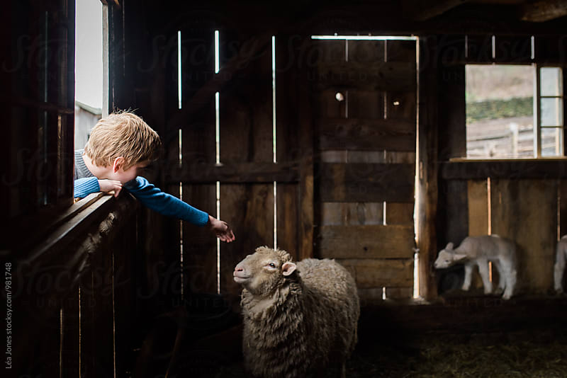 boy petting a sheep by Léa Jones for Stocksy United