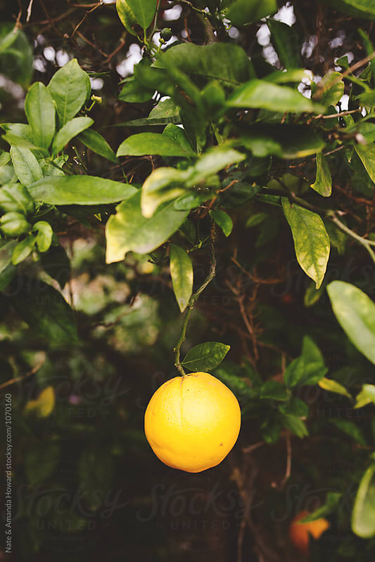 Lemon Tree by Nate & Amanda Howard for Stocksy United