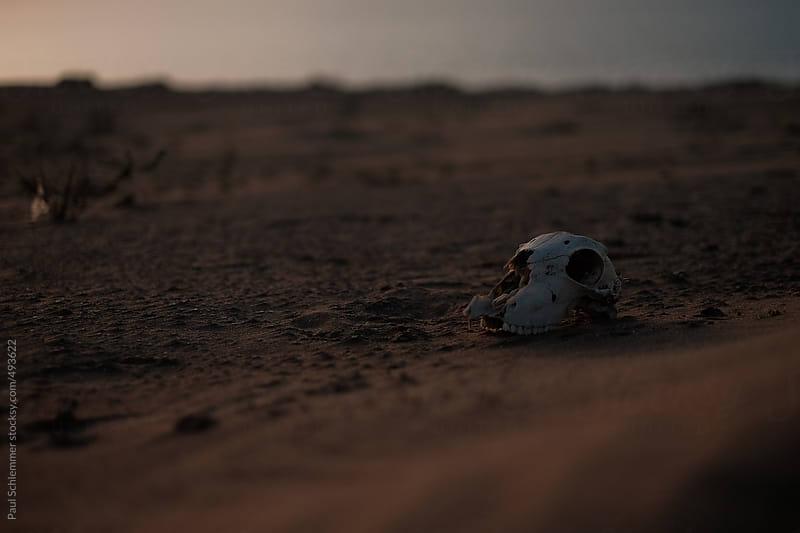 wasteland skull by Paul Schlemmer for Stocksy United