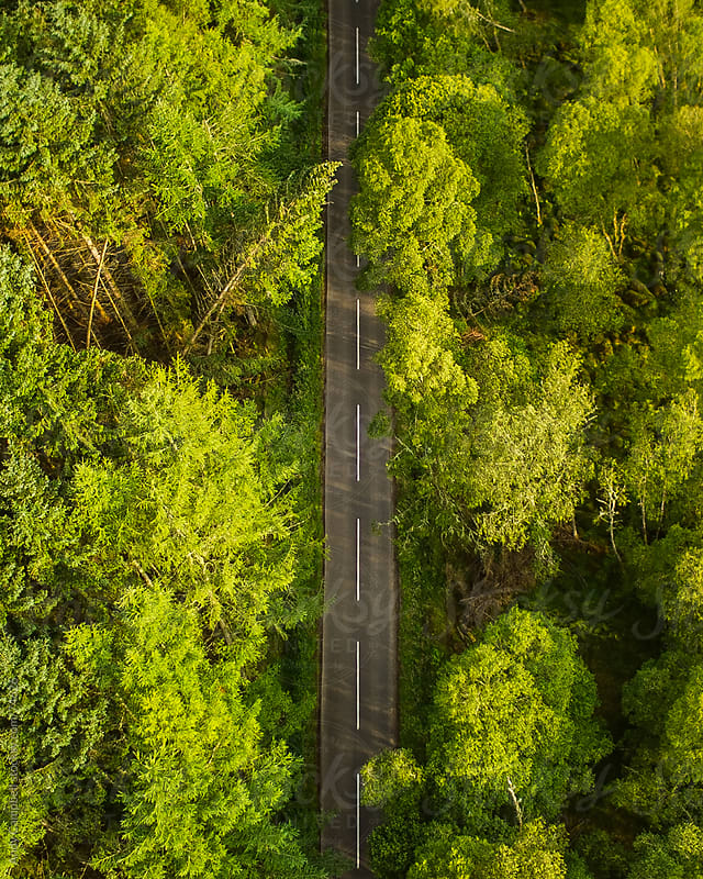 An aerial view of a small rural road bisecting a natural deciduous forest in Scotland. by Andy Campbell for Stocksy United