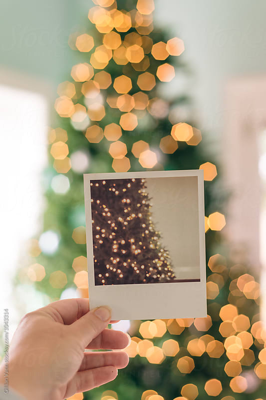 polaroid image of xmas tree, in front of a xmas tree by Gillian Vann for Stocksy United