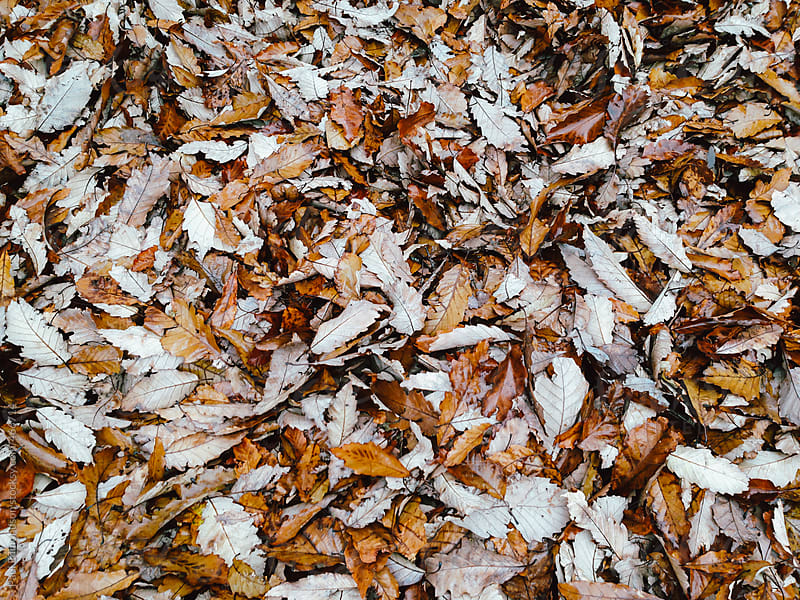 Pile of leaves in autumn by Paul Edmondson for Stocksy United