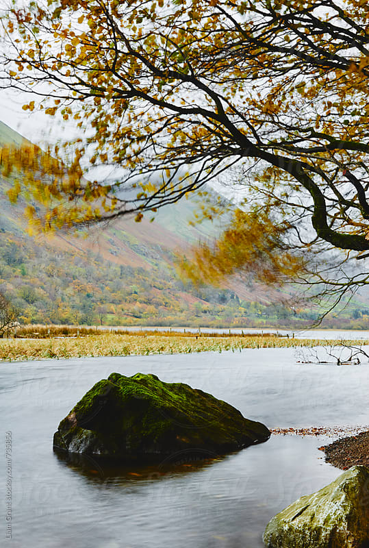 Autumnal trees blowing in the wind on the shore of Brothers Water. Cumbria, UK. by Liam Grant for Stocksy United