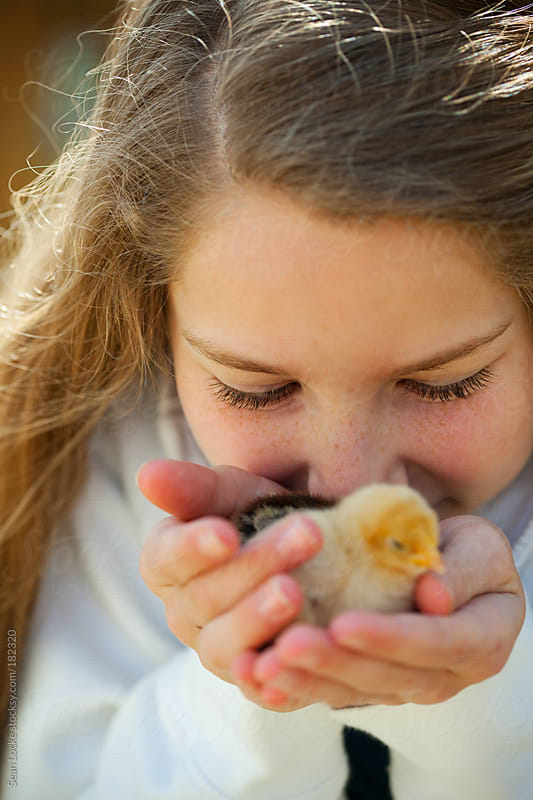 Chicks: Young Girl Kisses Baby Chicks by Sean Locke for Stocksy United
