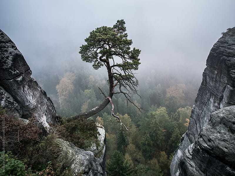 Lonely Tree on Rocks by Andreas Wonisch for Stocksy United