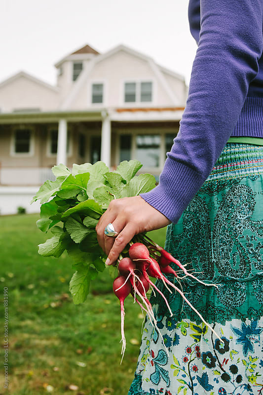 Radish Harvest at Home Garden by Raymond Forbes LLC for Stocksy United