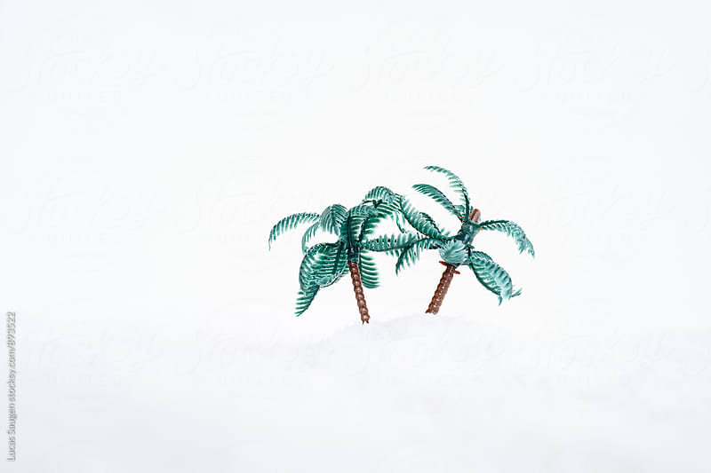 Palm trees and a winter snowy wonderland by Lucas Saugen for Stocksy United