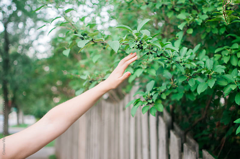 A woman reaching her hand out to a tree by Chelsea Victoria for Stocksy United