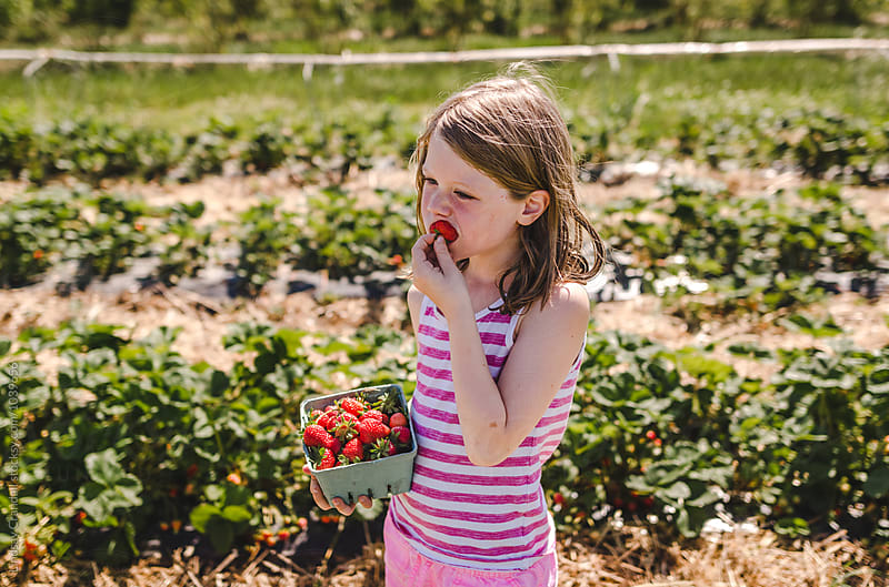 Young girl tasting freshly picked strawberries by Lindsay Crandall for Stocksy United