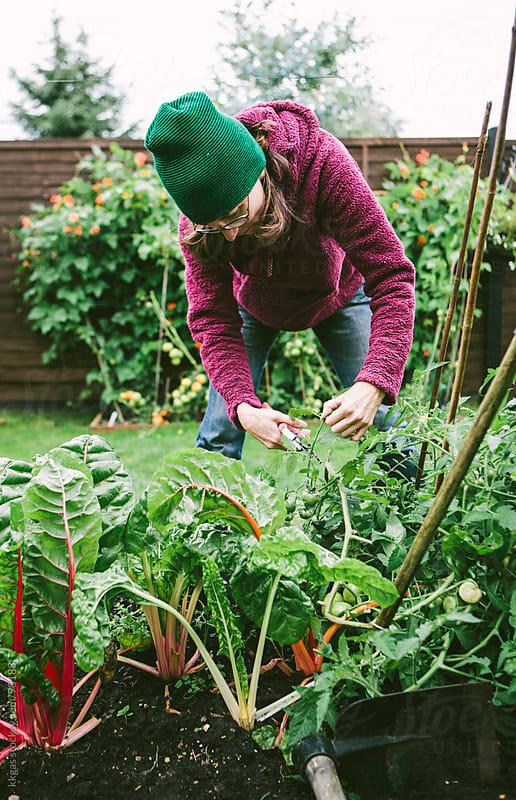 Gardener picking crops in vegetable garden by kkgas for Stocksy United