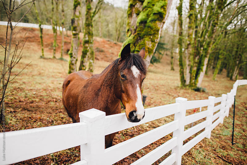 Friendly Horse At The Fence by Luke Mattson for Stocksy United