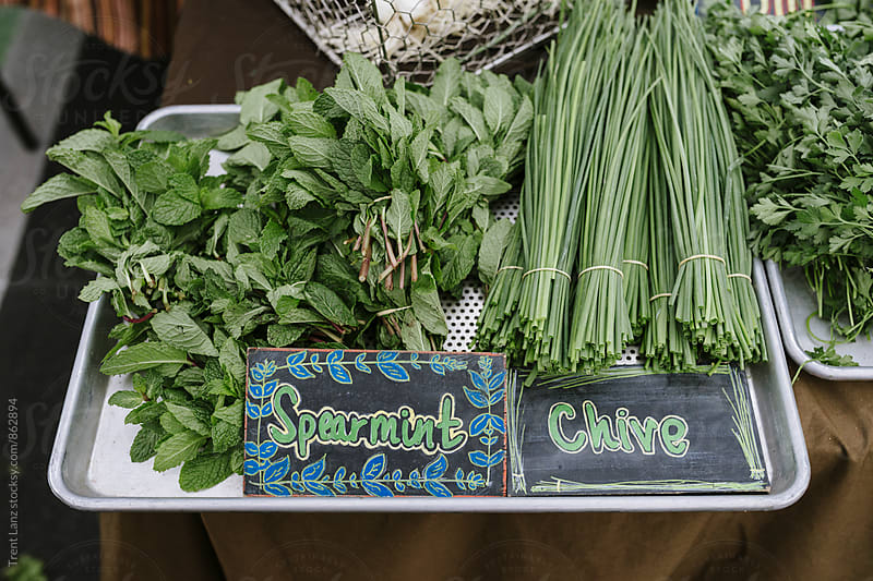 Farmers Market bunch of fresh organic spearmint and chives produce by Trent Lanz for Stocksy United