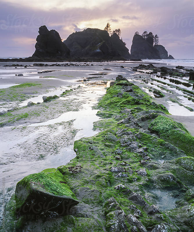 Sunset at Shi Shi Beach, Washington coast by Mark Windom for Stocksy United