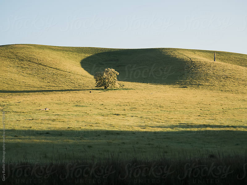 Australian Farm with Green Rolling Hills by Gary Radler Photography for Stocksy United