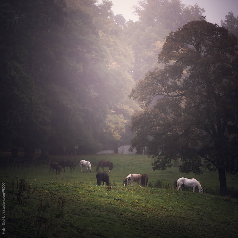 Horses in the morning fog by Helen Sotiriadis for Stocksy United