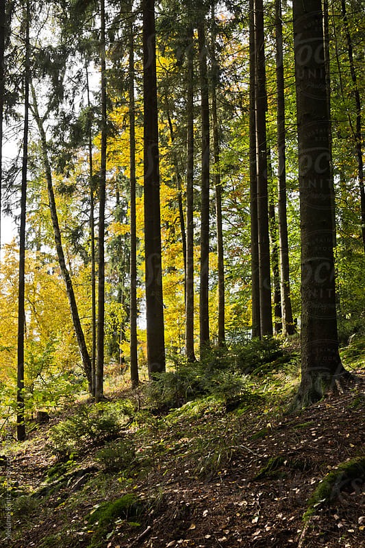 Forest in Fall by Melanie Kintz for Stocksy United