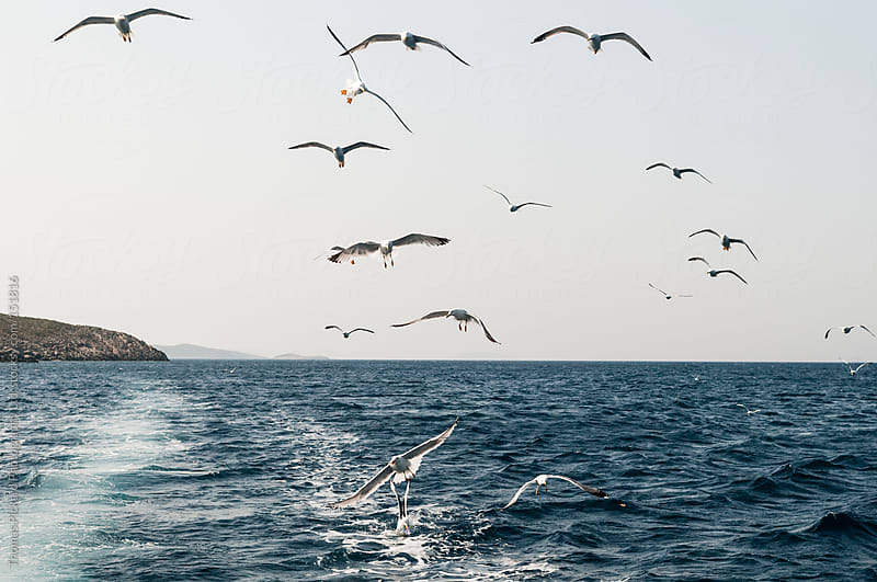 Sea gulls following a commercial fishing vessel, Fourni Islands, by Thomas Pickard Photography Ltd. for Stocksy United