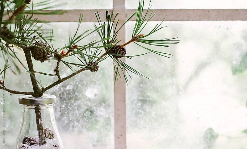 A pine twig in bottle in front of a window. by Helen Rushbrook for Stocksy United