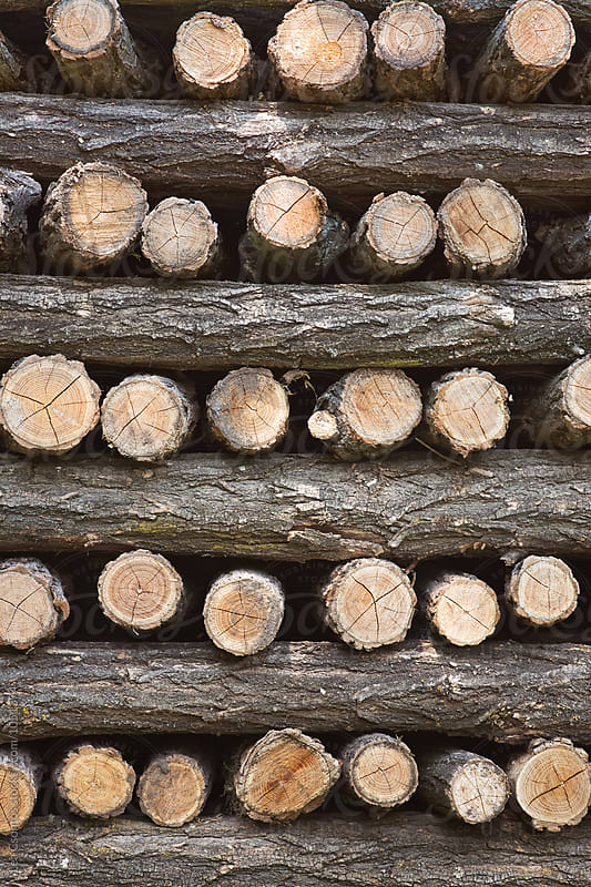 Wood stack by Lea Csontos for Stocksy United