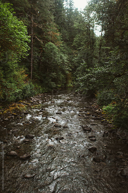 Creek/River Running Through the Olympic National Park in Washington by michelle edmonds for Stocksy United