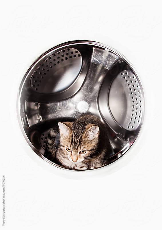 Kitty in washing machine by Yury Goryanoy for Stocksy United