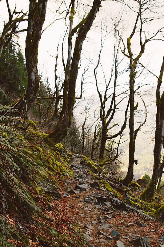 Path creeping along spooky ridge by Jesse Morrow for Stocksy United