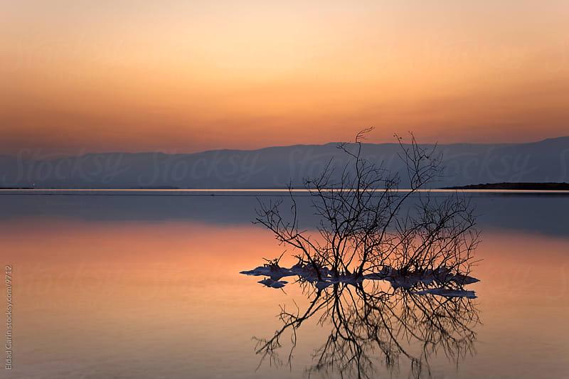 Dead Sea Sunrise - Dead Bush at Dawn by Eldad Carin for Stocksy United